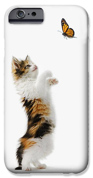 Kitten and Monarch Butterfly iPhone Case by Wave Royalty Free