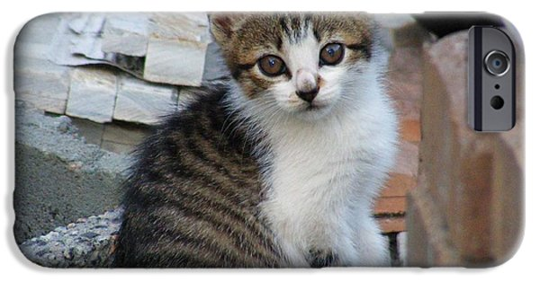 Animals Photographs iPhone Cases - Kitten at Play iPhone Case by Making Memories Photography LLC