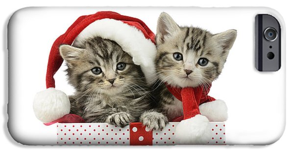 Xmas iPhone Cases - Kitten In Presents iPhone Case by Greg Cuddiford