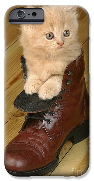 Greg Cuddiford Digital iPhone Cases - Kitten in Shoe CK181 iPhone Case by Greg Cuddiford