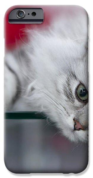 Kitten iPhone Case by Melanie Viola