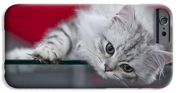 Familiar iPhone Cases - Kitten iPhone Case by Melanie Viola