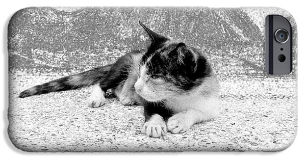 Stray iPhone Cases - Kitten on a Temple Bench iPhone Case by Dean Harte