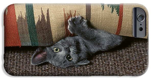 Domestic Short Hair Cat iPhone Cases - Kitten Under Couch iPhone Case by James L. Amos