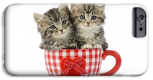 Sitting iPhone Cases - Kittens In A Gingham Cup iPhone Case by Greg Cuddiford