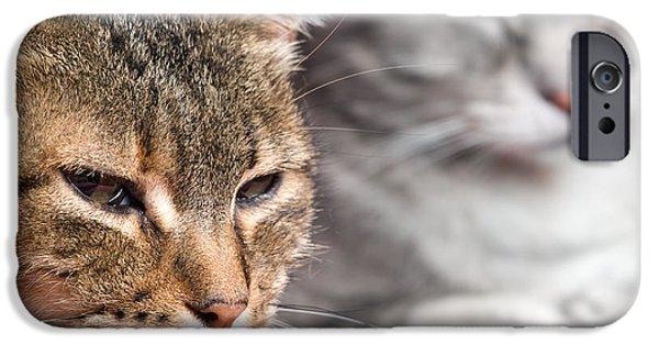 Gray Hair iPhone Cases - Kitties again iPhone Case by Sinisa Botas