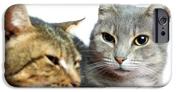 Gray Hair iPhone Cases - Kitties iPhone Case by Sinisa Botas