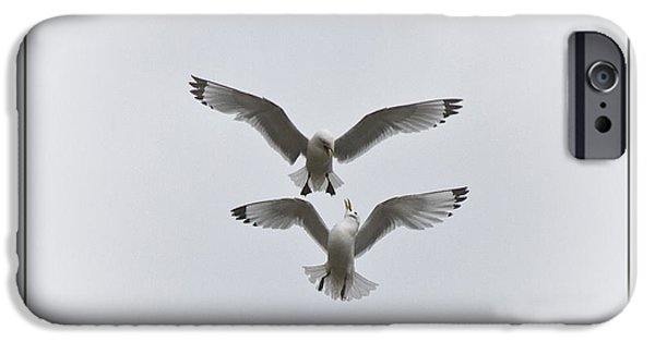 Flying Seagull iPhone Cases - Kittiwakes Dancing in the Air iPhone Case by Heiko Koehrer-Wagner