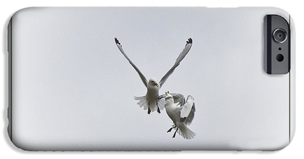 Flying Seagull iPhone Cases - Kittiwakes Flight iPhone Case by Heiko Koehrer-Wagner
