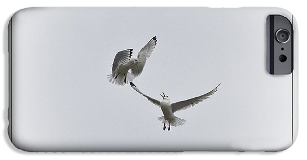 Flying Seagull iPhone Cases - Kittiwakes iPhone Case by Heiko Koehrer-Wagner