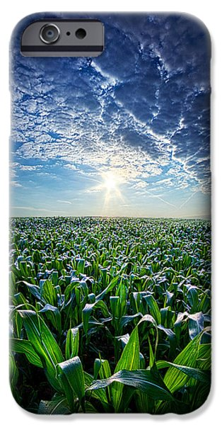Corn iPhone Cases - Knee High in July iPhone Case by Phil Koch