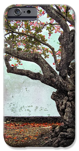 KNOTTED TREE iPhone Case by Daniel Hagerman