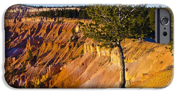 Tree Roots iPhone Cases - Know Your Roots - Bryce Canyon iPhone Case by Jon Berghoff