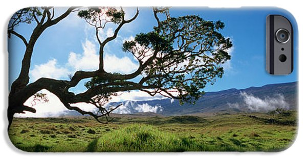 Big Island iPhone Cases - Koa Tree On A Landscape, Mauna Kea, Big iPhone Case by Panoramic Images