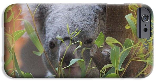 Koala iPhone Cases - Koala Bear  iPhone Case by Dan Sproul
