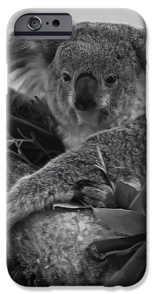 Koala Digital Art iPhone Cases - Koala iPhone Case by Chris Flees