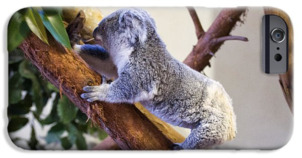 Koala Digital Art iPhone Cases - Koala climbing tree iPhone Case by Chris Flees