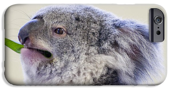Koala Digital Art iPhone Cases - Koala close up iPhone Case by Chris Flees