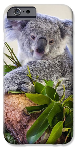 Koala Digital Art iPhone Cases - Koala on top of a tree iPhone Case by Chris Flees