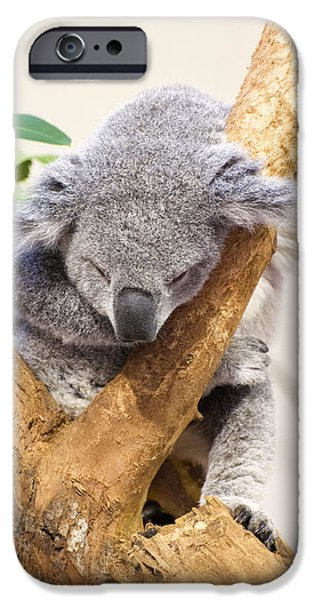 Koala Digital Art iPhone Cases - Koala sleeping  iPhone Case by Chris Flees