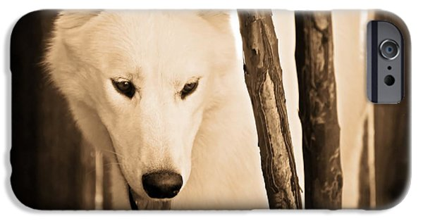 Huskies iPhone Cases - Kodiak iPhone Case by Christina Ochsner