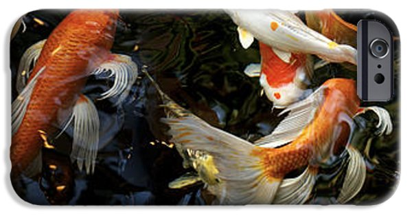 Pet Photography iPhone Cases - Koi Carp Swimming Underwater iPhone Case by Panoramic Images