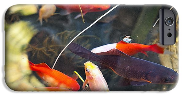 San Francisco Famous Photographers iPhone Cases - Koi Pond the Symbol of Love and Friendship iPhone Case by Artist and Photographer Laura Wrede