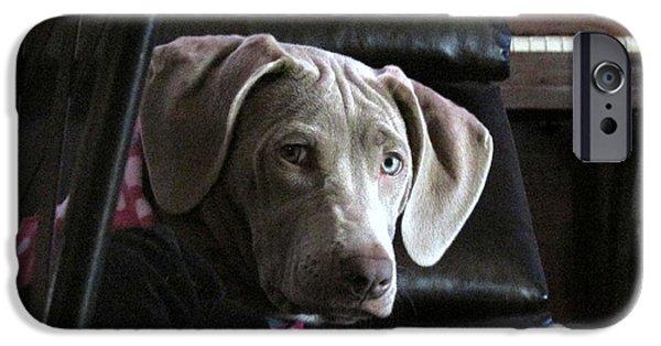 Weimaraner Puppy iPhone Cases - Koko iPhone Case by Kathrine Graphman