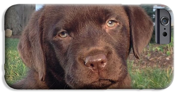 Chocolate Lab iPhone Cases - Kona iPhone Case by Betty Baker