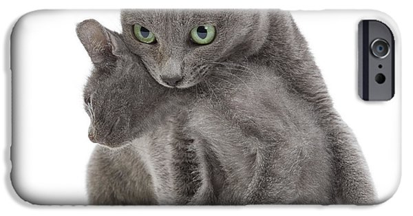 Gray Hair iPhone Cases - Korat Cat And Kitten iPhone Case by Jean-Michel Labat