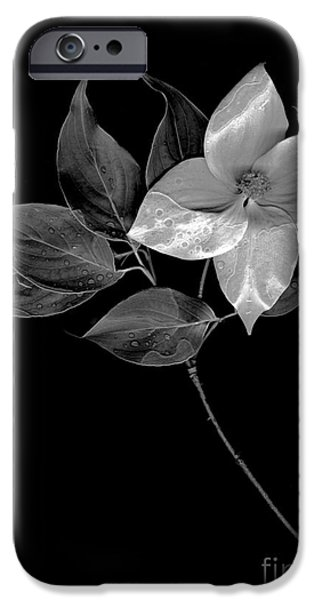 Scanography iPhone Cases - Kousa Dogwood in Black and White iPhone Case by Sharon  Talson