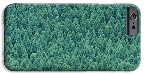Pines iPhone Cases - Kujyu Cho Ooita Japan iPhone Case by Panoramic Images