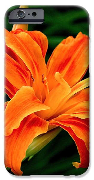 Kwanso Lily iPhone Case by Rona Black
