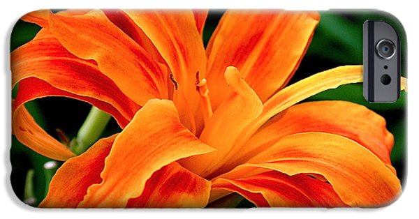 Bloom iPhone Cases - Kwanso Lily iPhone Case by Rona Black