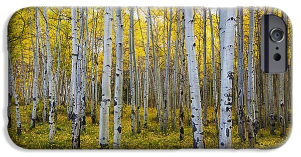 Escape iPhone Cases - La Sal Aspen iPhone Case by Mark Kiver
