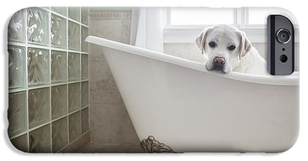 Camera iPhone Cases - Lab in a Bathtub iPhone Case by Diane Diederich