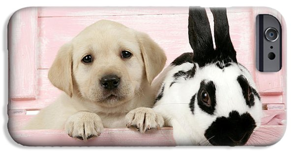 Mixed Labrador Retriever iPhone Cases - Lab Puppy And Bunny iPhone Case by John Daniels