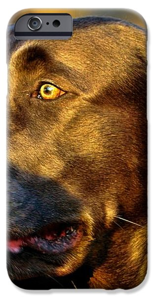 Lab Puppy at Sunset iPhone Case by Kristina Deane