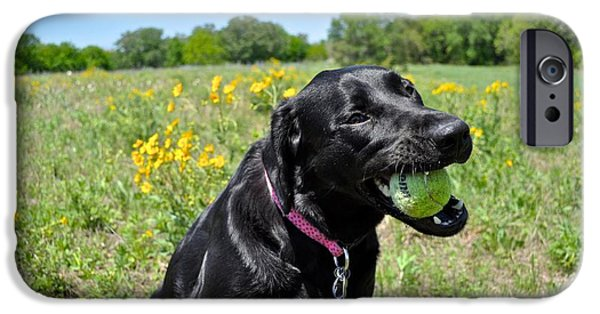 Dog And Wildflowers iPhone Cases - Lab with a Tennis Ball iPhone Case by Kristina Deane