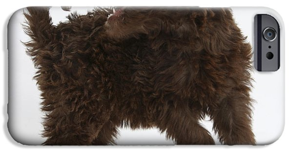 Cute Puppy iPhone Cases - Labradoodle Puppy iPhone Case by Mark Taylor