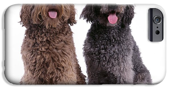 Mixed Labrador Retriever iPhone Cases - Labradoodles iPhone Case by John Daniels