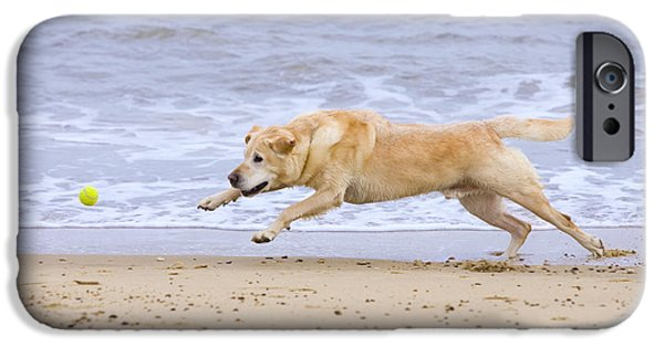 Dog Playing Ball iPhone Cases - Labrador Dog Chasing Ball On Beach iPhone Case by Geoff du Feu