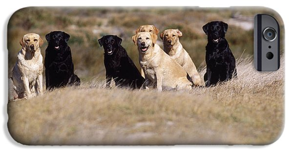 Mixed Labrador Retriever iPhone Cases - Labrador Dogs Waiting For Orders iPhone Case by Chris Harvey