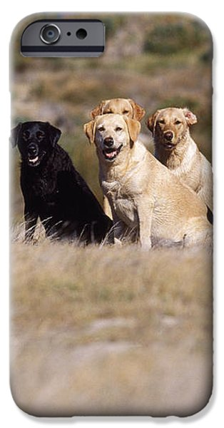 Labrador Dogs Waiting For Orders iPhone Case by Chris Harvey