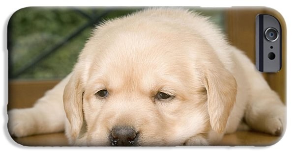 Dog Close-up iPhone Cases - Labrador Puppy Dog iPhone Case by Jean-Michel Labat