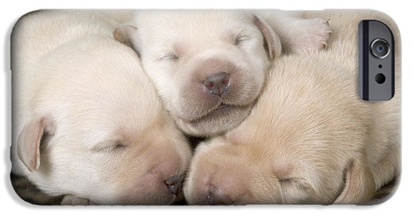 Dog Close-up iPhone Cases - Labrador Puppy Dogs iPhone Case by Jean-Michel Labat