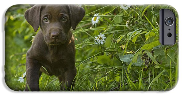 Chocolate Lab iPhone Cases - Labrador Retriever iPhone Case by Linda Freshwaters Arndt