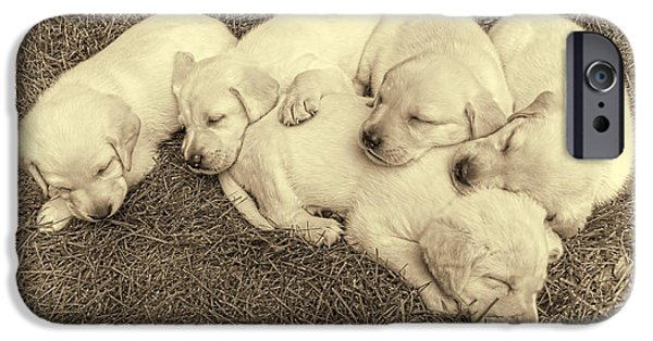 Puppies iPhone Cases - Labrador Retriever Puppies Nap Time Vintage iPhone Case by Jennie Marie Schell