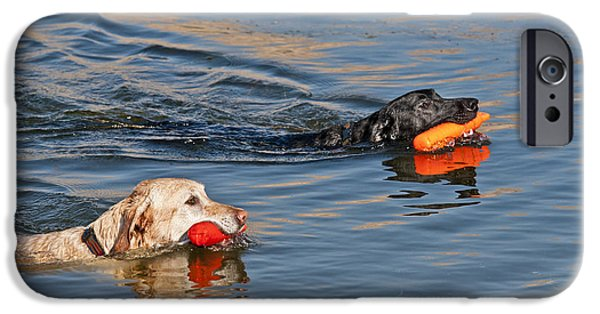 Water Retrieve iPhone Cases - Labrador Retrievers In Pond iPhone Case by William H. Mullins