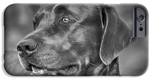 Black Dog iPhone Cases - Labrador Sweetie iPhone Case by Kristina Deane